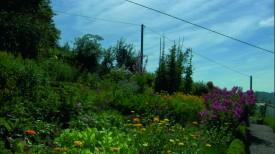 Bauerngarten im Hochschwarzwald
